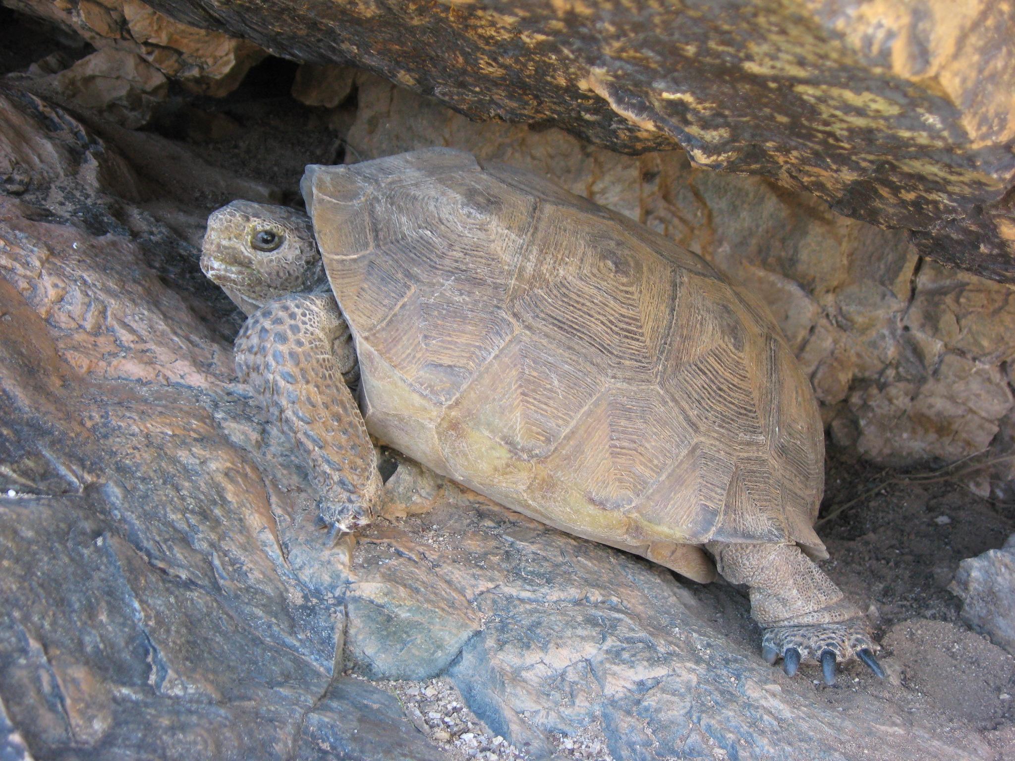 University Of Arizona Natural Science Courses