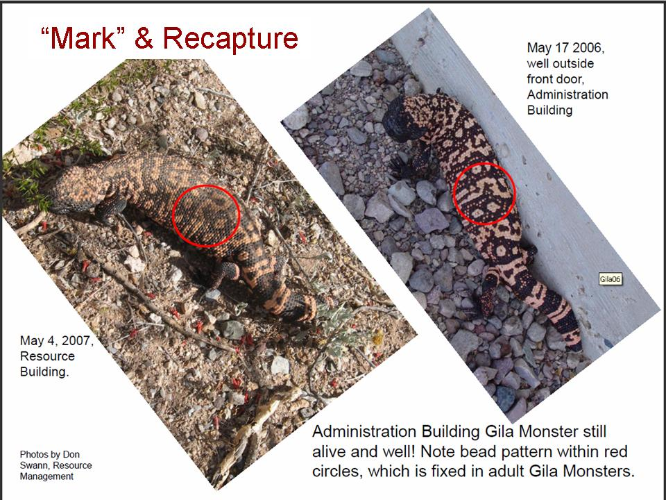 Gila Monster Repeat Photography, Don Swann, NPS